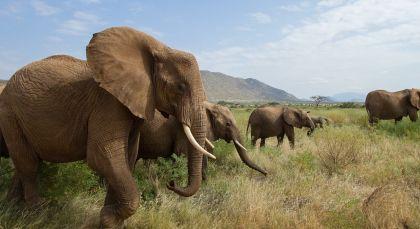 Destination Samburu in Kenya