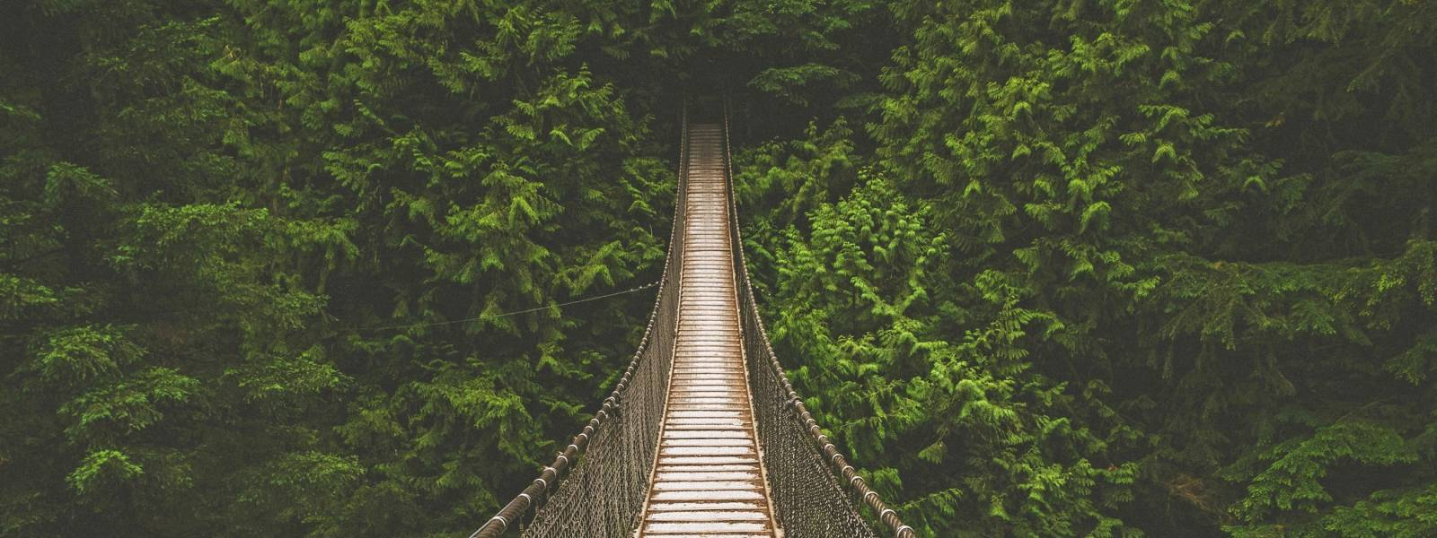 a bridge surrounded by trees
