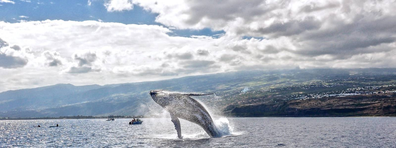 Whales and Dolphins Cap La Houssaye