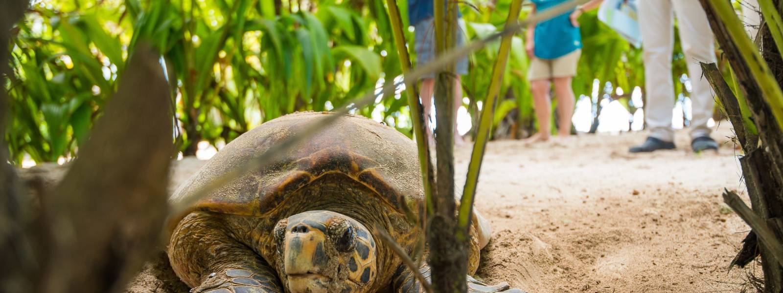 a turtle on a dirt road