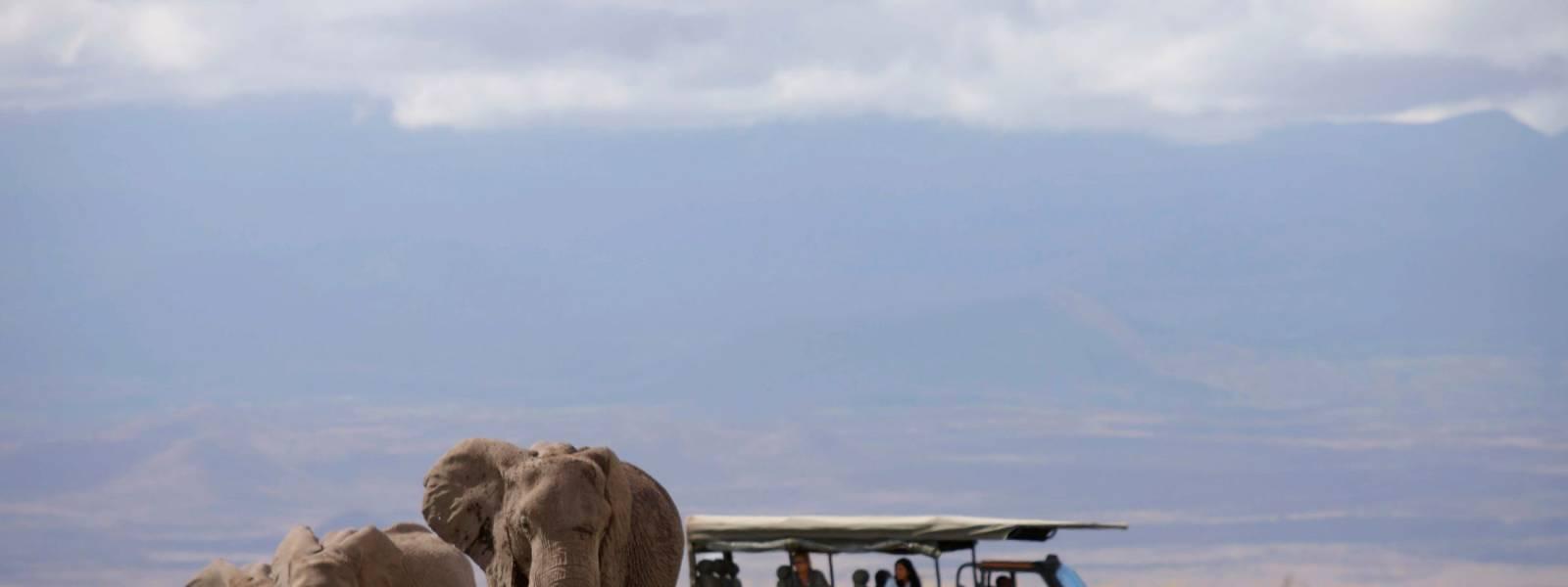 a herd of elephants walking across a grass covered field