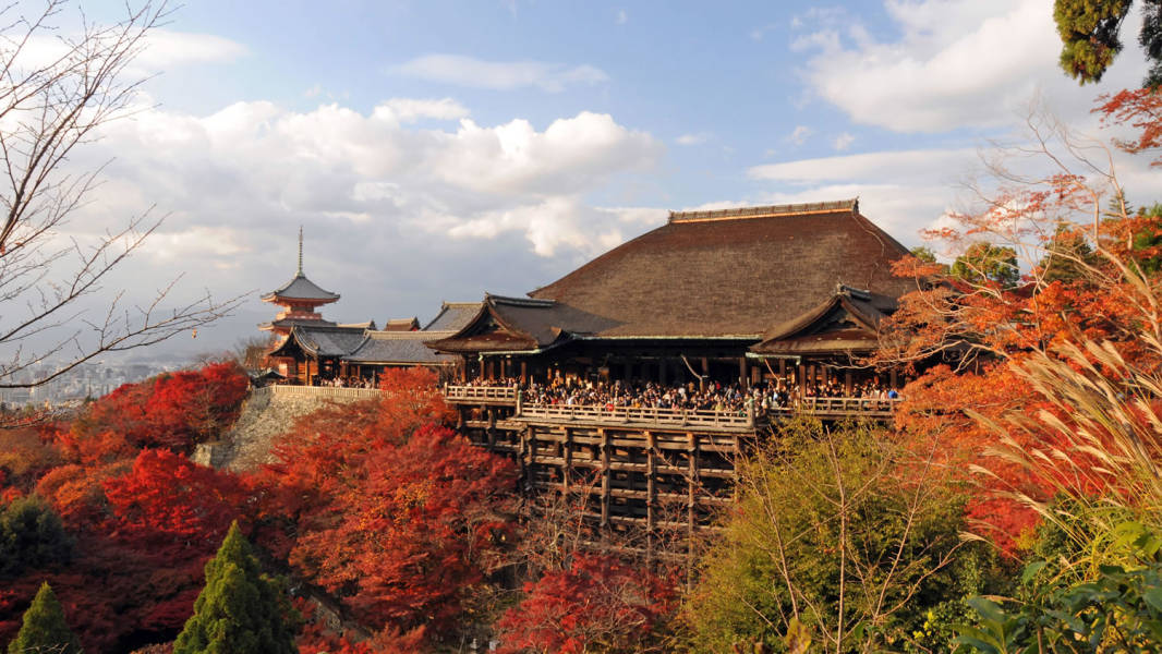 a group of bushes in a garden with Kiyomizu-dera in the background