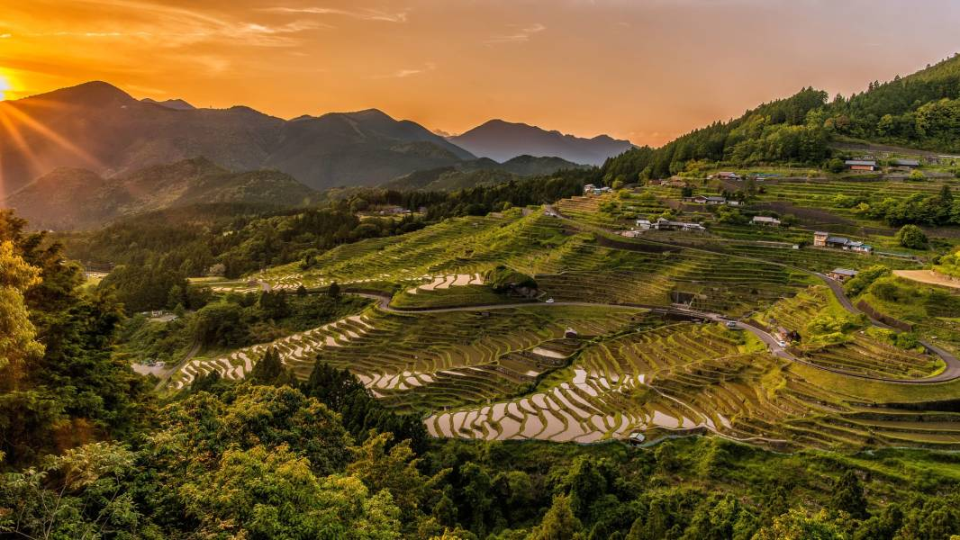 Rice terraces at sunset in Japan