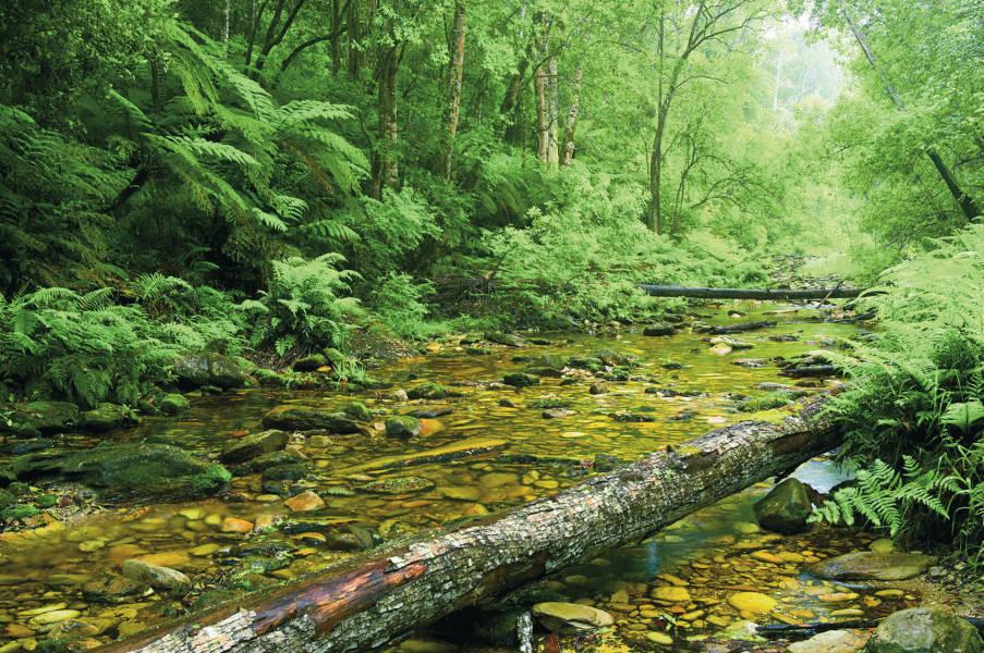Tsitsikamma Forest Garden Route