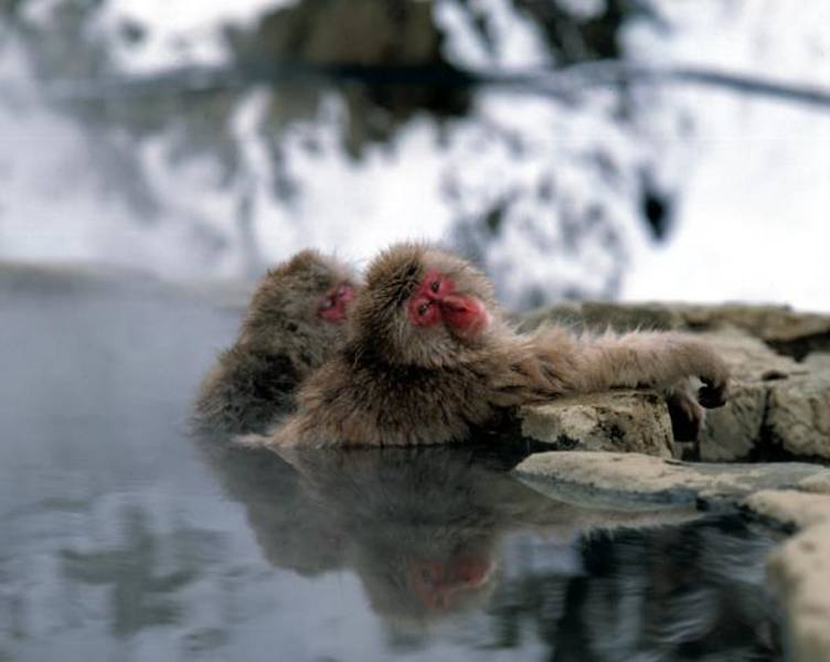 a bear in the snow