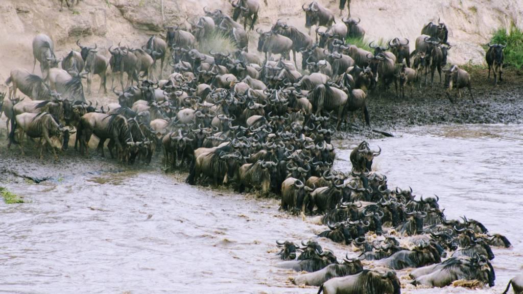 Kenya migration September