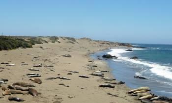 Elephant Seal Beach, San Simeon