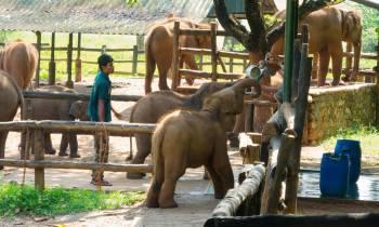 Elephant transit home - Udawalawe
