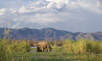a elephant that is standing on a lush green field