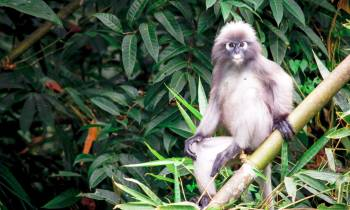 a monkey sitting on a branch