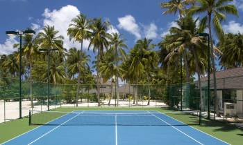 a palm tree on a court with a racket
