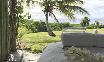 a group of palm trees on a bed