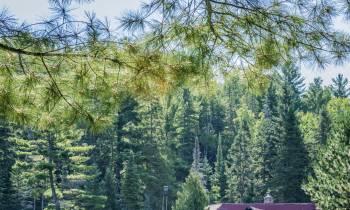 Arowhon Pines, Ontario