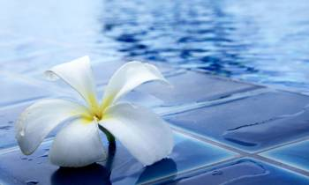 a white flower on water
