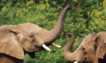 Elephants at the Shamwari Game reserve