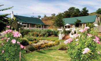 a close up of a flower garden in front of a house