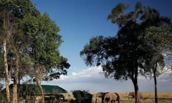 a herd of giraffe standing next to a tree