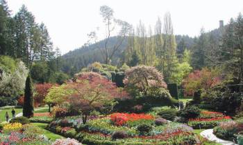 a close up of a flower garden with Butchart Gardens in the background