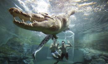 darwin croc cove