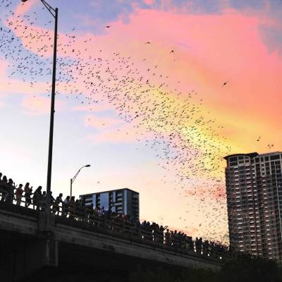 South Congress Bat Bridge