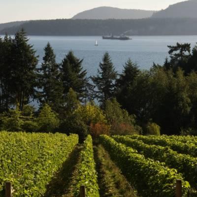 Vineyards, Pender Island, British Columbia