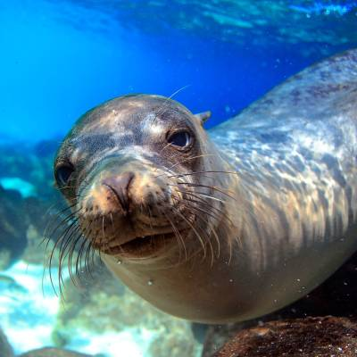 Sealion in the Galapagos Islands