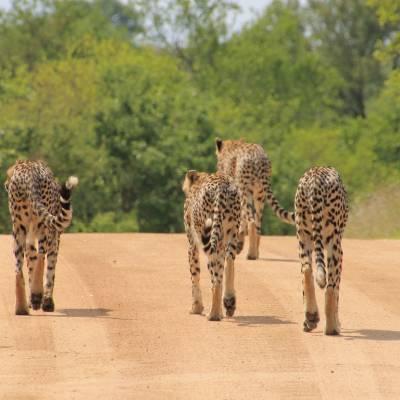a group of giraffe standing on top of a dirt field
