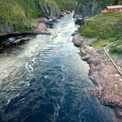 Eagle River Labrador