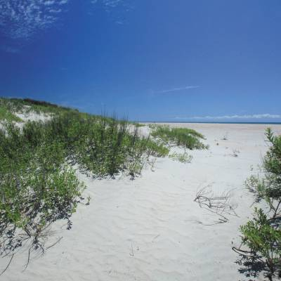 Sand Dunes and Beach at Ocracoke Island