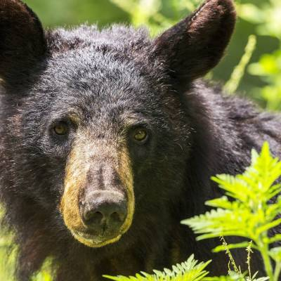 a black bear is standing in the grass