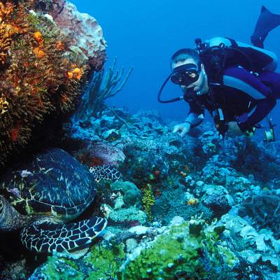 Diving Grenada Tourism Authority
