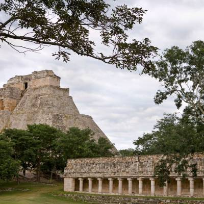 a tree in front of Uxmal
