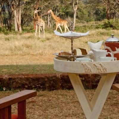 a giraffe sitting in the grass