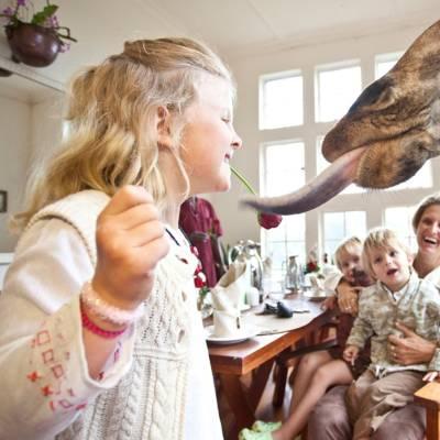 a woman feeding a giraffe