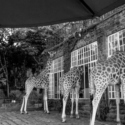 a group of giraffe standing next to a building