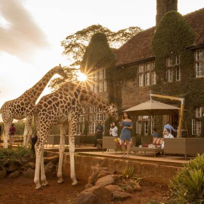 a giraffe standing in front of a building