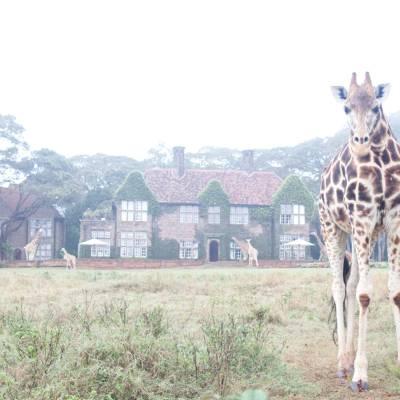 a giraffe standing on top of a grass covered field