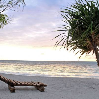 a palm tree on a beach near a body of water