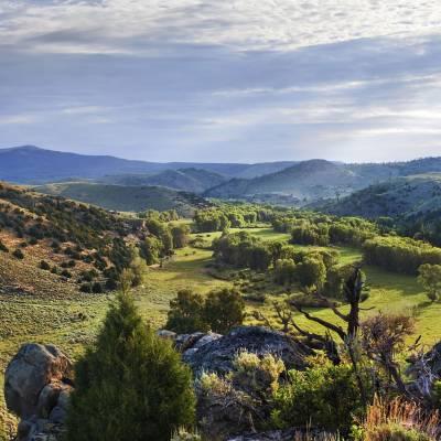 Ranch scenary