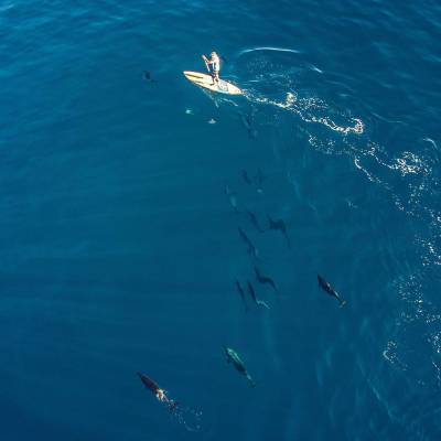 Stand up paddle with dolphins