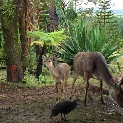 Wildlife at Bubble Lodge