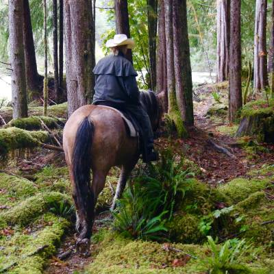 a horse standing on top of a lush green forest