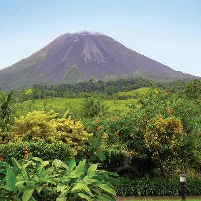 a group of bushes with Arenal Volcano in the background