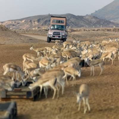 a herd of sheep walking down a dirt road
