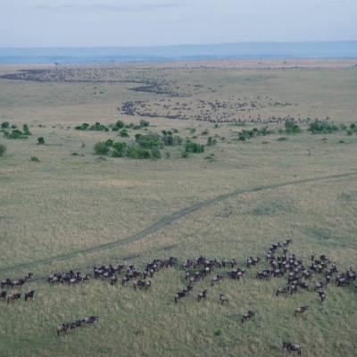 a herd of sheep walking across a grass covered field