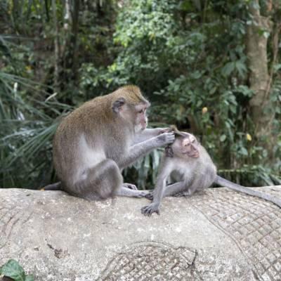 a monkey sitting on a rock