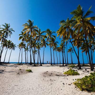 Puuhonua O Honaunau coconut grove