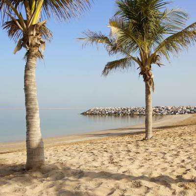 Palm Trees, Ras Al Khaimah
