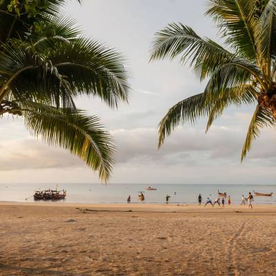 a group of people on a beach with a palm tree