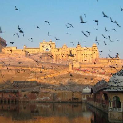 Jaipur Palace, flying birds